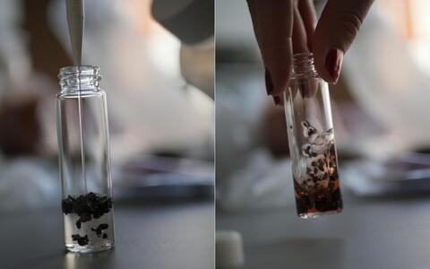 Košrnilli putukas jahedas vees enne ja pärast mõnesekundilist loksutamist.