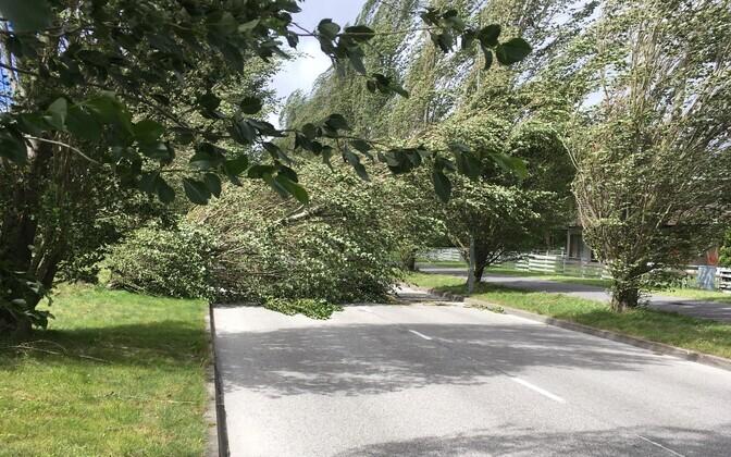 Упавшее в результате шторма дерево. Иллюстративная фотография.