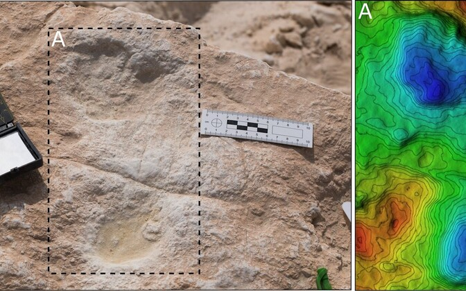 Analüüsi põhjal jäeti jäljed umbes 120 tuhande aasta eest ja nende seas on nii inimeste, elevantide, hobuste kui ka teiste loomade jälgi.