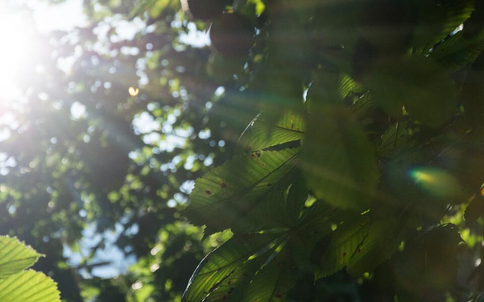 Päike-