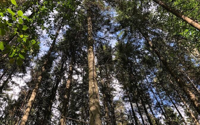 В Министерстве финансов готовят поправки к Закону о лесе.