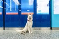 Всего работе в аэропорту будут обучены 16 собак.