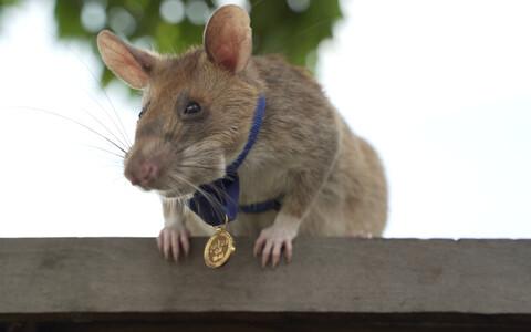 Магава получила медаль за свой героизм.