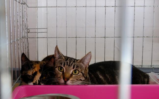 Кошки приюта Narva Kassituba ежедневно съедают десять килограммов корма.
