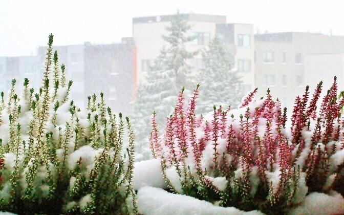В Эстонии похолодает.