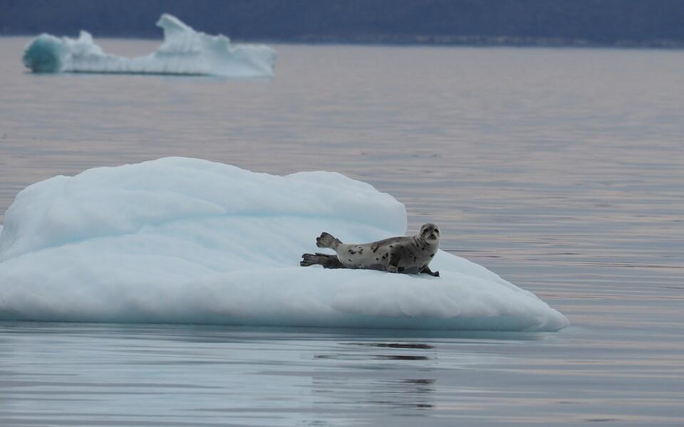 Ainuüksi Antarktikas ja Gröönimaal on jäätunud olekus vett piisavalt, et see võiks ära sulades kergitada maailmamere taset 60 meetri võrra.