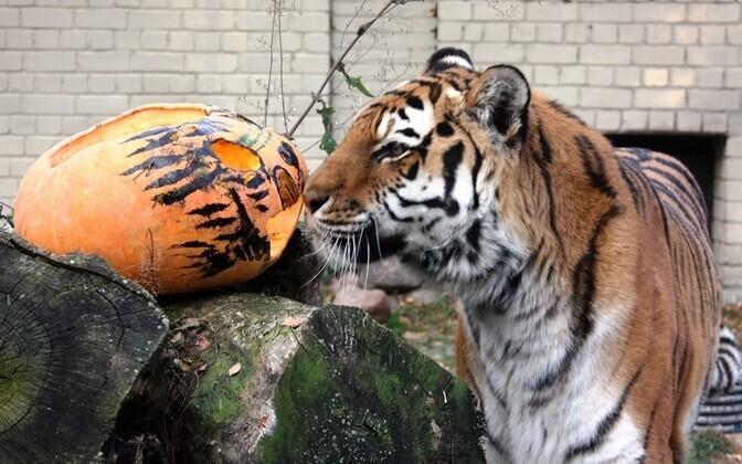 праздник тыквы в зоопарке.