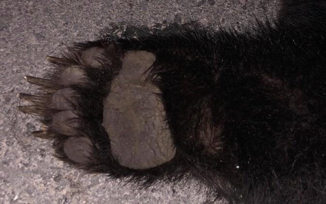 Медведь погиб на месте.