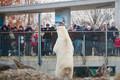 Kõrvitsapidu loomaaias