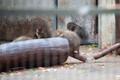 Праздник тыквы в Таллиннском зоопарке.