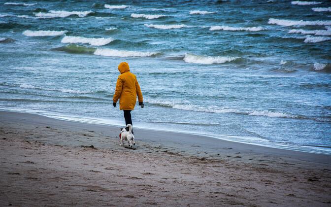 Koerajalutaja mere ääres