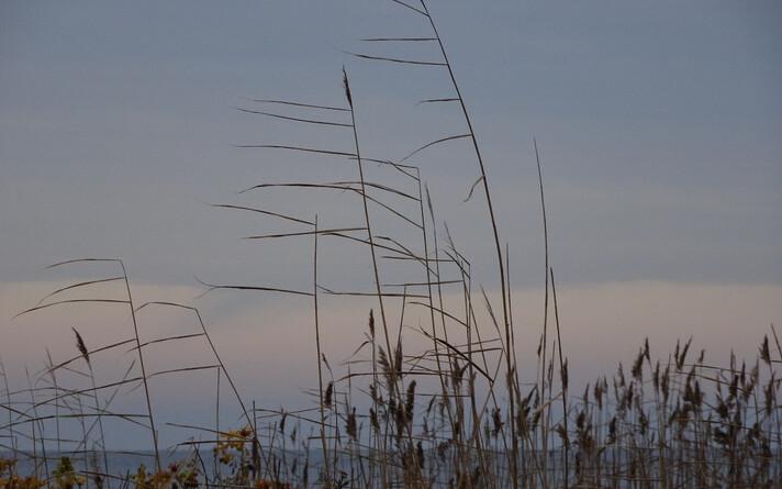 В Эстонии становится длиннее осень.