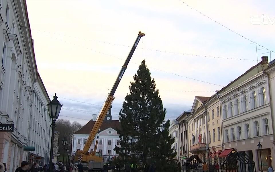 На Ратушную площадь Тарту была доставлена рождественская ель.