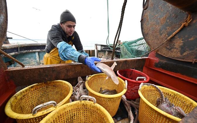 Briti kalurid loodavad, et Brexiti järel suurenevad nende võimalused oma riigi ranniku lähistel kala püüda.