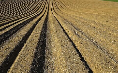 Rähkmullad moodustavad 6,3 protsenti kogu Eesti mullastikust ja 11,1 protsenti põllumaast.