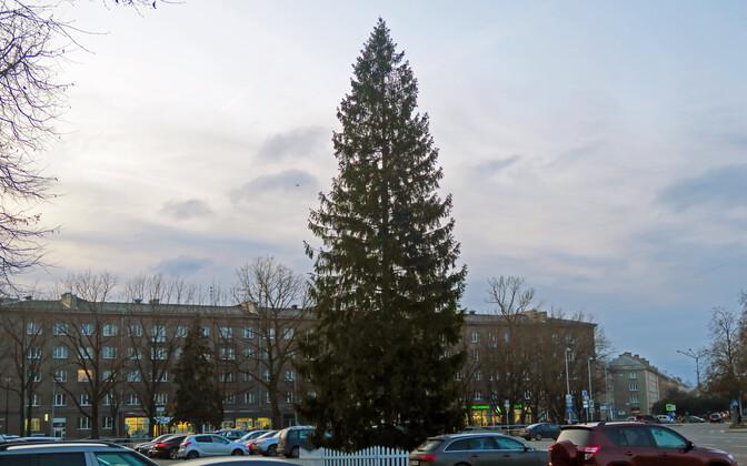 Новогодняя ель на Петровской площади, 2019 год.