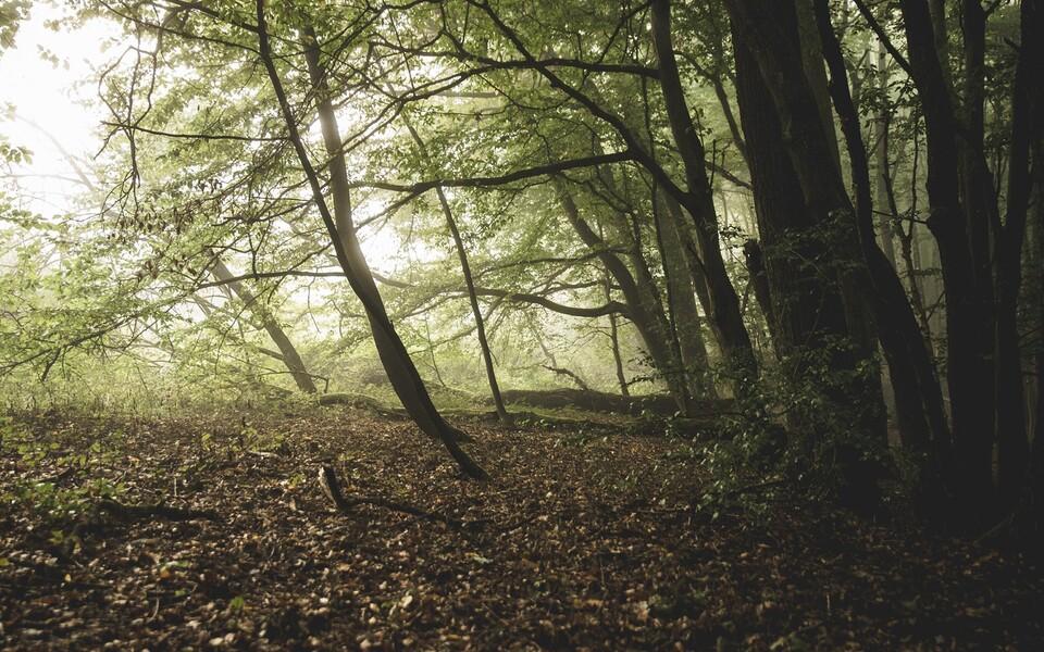 Taimed ei suuda enam süsihappegaasi sama tõusvas tempos siduda, kui mõned aastakümned tagasi.