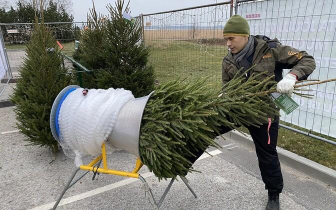 Пункт самообслуживания для покупки елки.