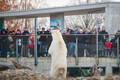 Белый медведь Арон смотрит на людей перед отъездом из Эстонии.
