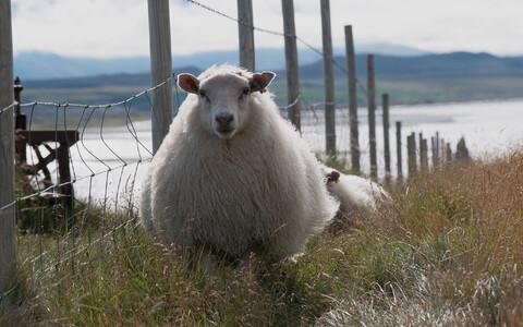 Kuigi afantaasiaga inimene ei suuda uinudes mõttes lambaid lugeda, on tema ruumitaju sama hea ning mälu isegi parem kui teistel inimestel.