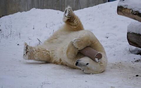 Зима в Таллиннском зоопарке.