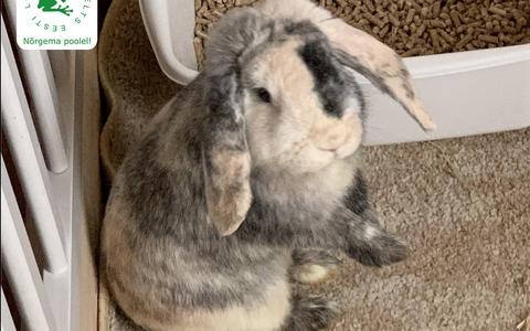 Кролик Борис.