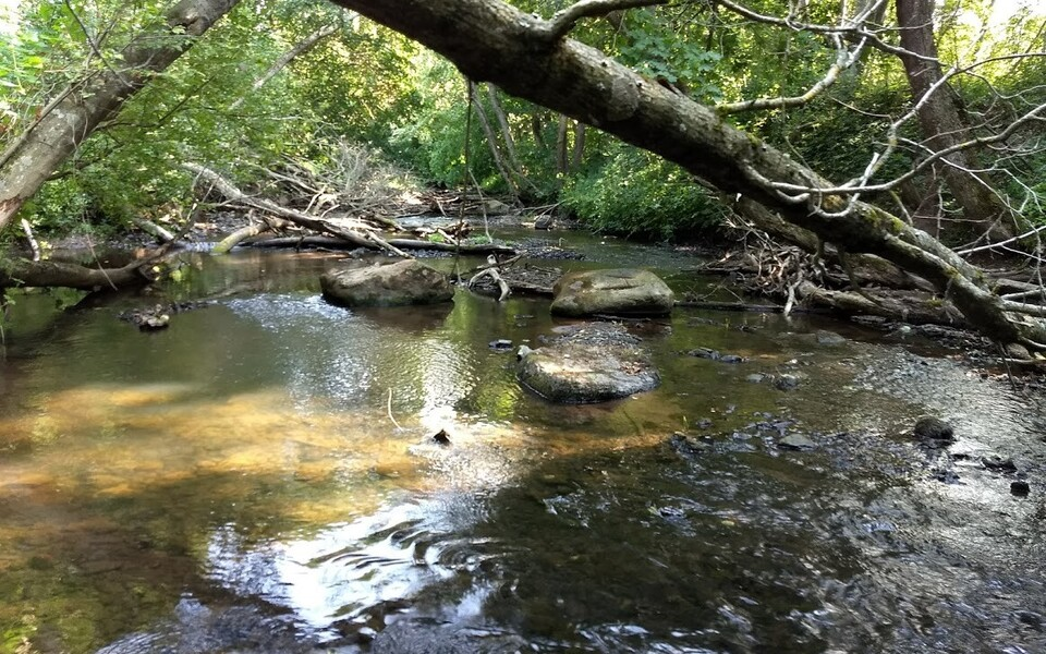 Puude varjutus kaitseb vooluveekogusi suvise veetemperatuuri tõusu eest.