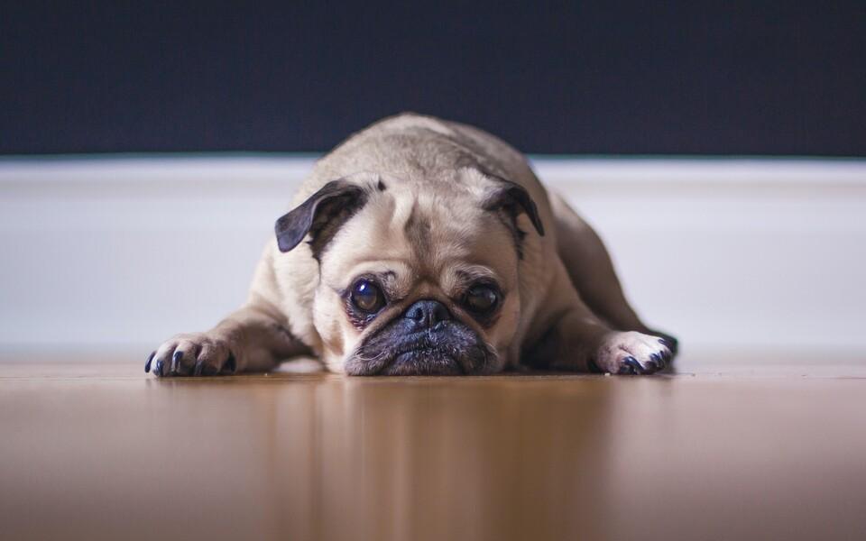 Koeraekspert Kirke Ert: muretsema panevad inimesed, kes hetkeemotsiooni ajendil koera võtnud
