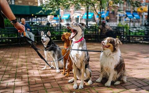 Omaniku iseloom kipub koera käitumist mõjutama.
