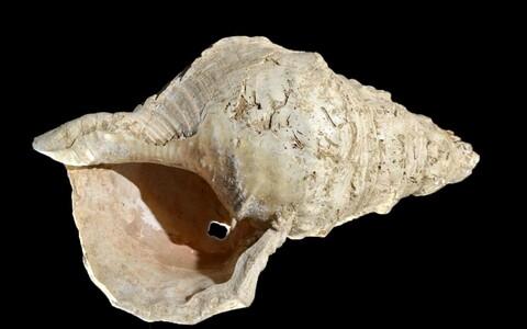 17 000 aastat vana merekarp.