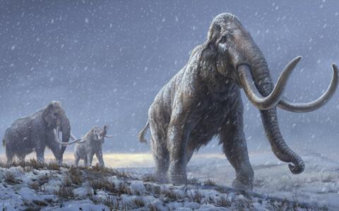 Karvase mammuti esivanemaks olnud stepimammutid kunstniku nägemuses.
