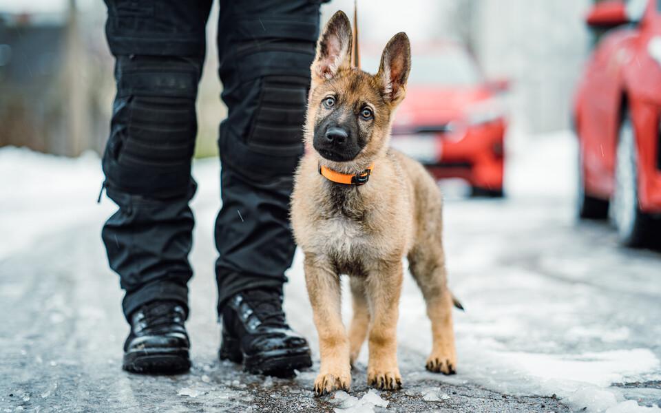 Päästeameti koerad