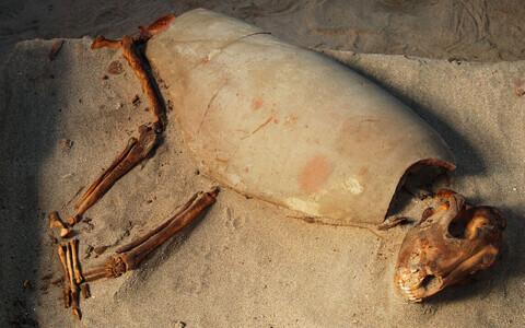 Koduloomi maeti juba antiikmaailmas.