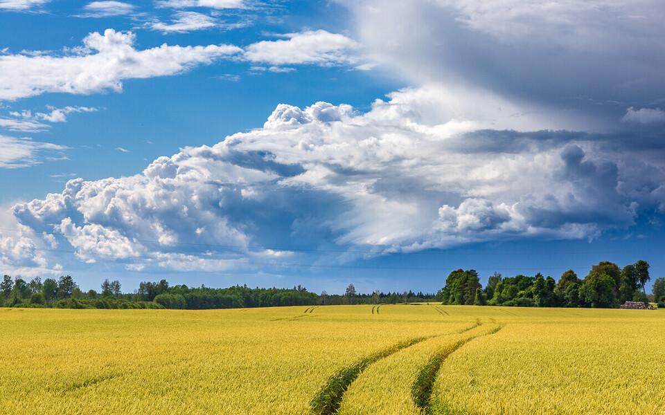 Nii soe pole Eestis olnud vähemalt viimased 60, võimalik, et 150 aastat.