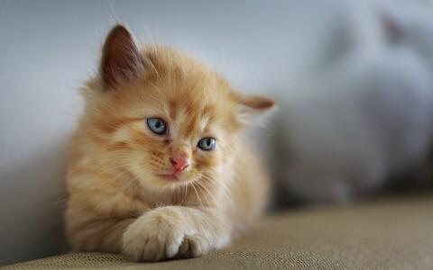 Omanikul ei tasu kohe oma kassi hoolimatuses süüdistada, vaid pigem teada, et lemmik ei pruugi lihtsalt omanikku mõista.