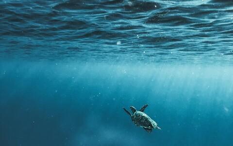 Ookeani sügavamtes kihtides toimuv pakub endiselt avastamisrõõmu.