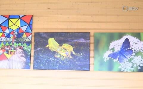 Ülo Soometsa fotod Tori bussiootepaviljonis.