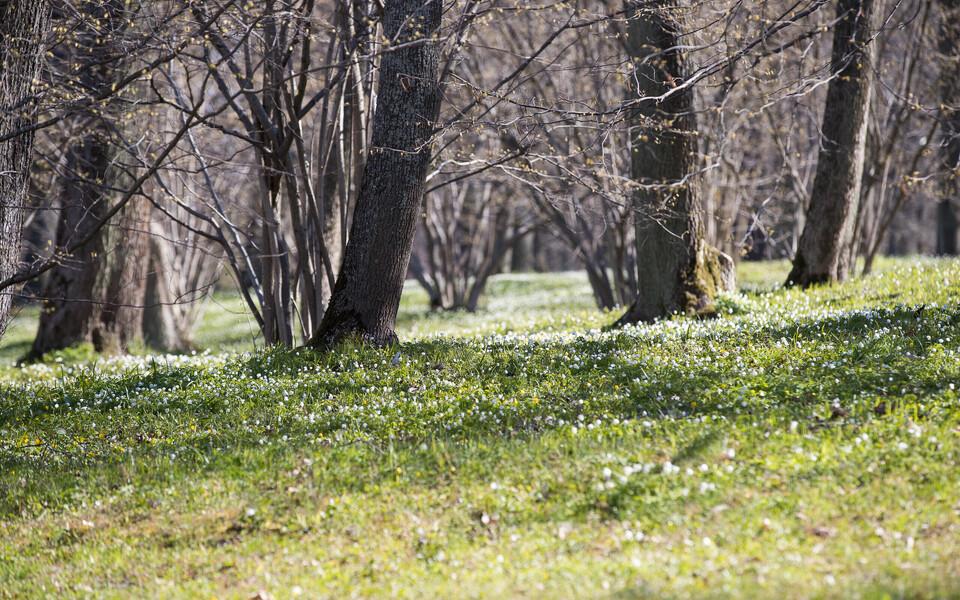 Kevade arenedes lisandub mulla- ja lehelõhnale ka õite lõhnapilv.