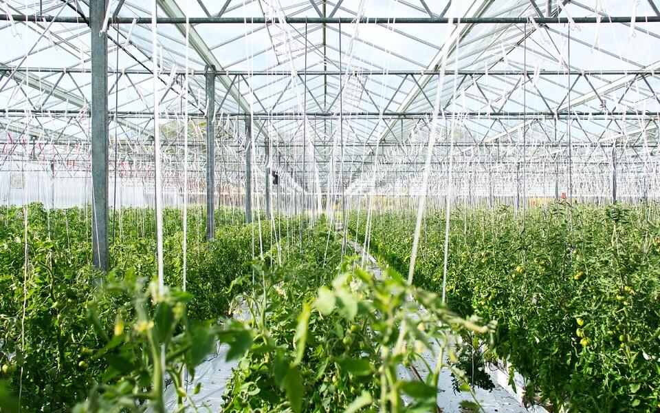 Uue põlvkonna kasvuhoone rajamise kuluks hinnatakse umbes 20 miljardit dollarit.