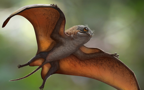 Sinomacrops bondei rekonstruktsioon.