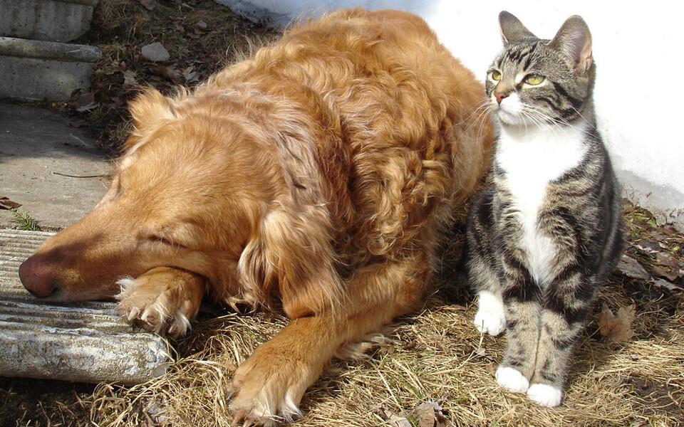 Nüüd õpilasuurimuse raames tehtud kordusküsitluse põhjal eelistavad lapsed koertele hoopis kasse.