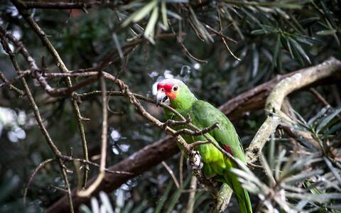 Lindude osas on kõige kriitilisem just Amazonase vihmametsa lääneosa, kus on suur liigirikkus ning mitmed erisuunalised riigipiirid.