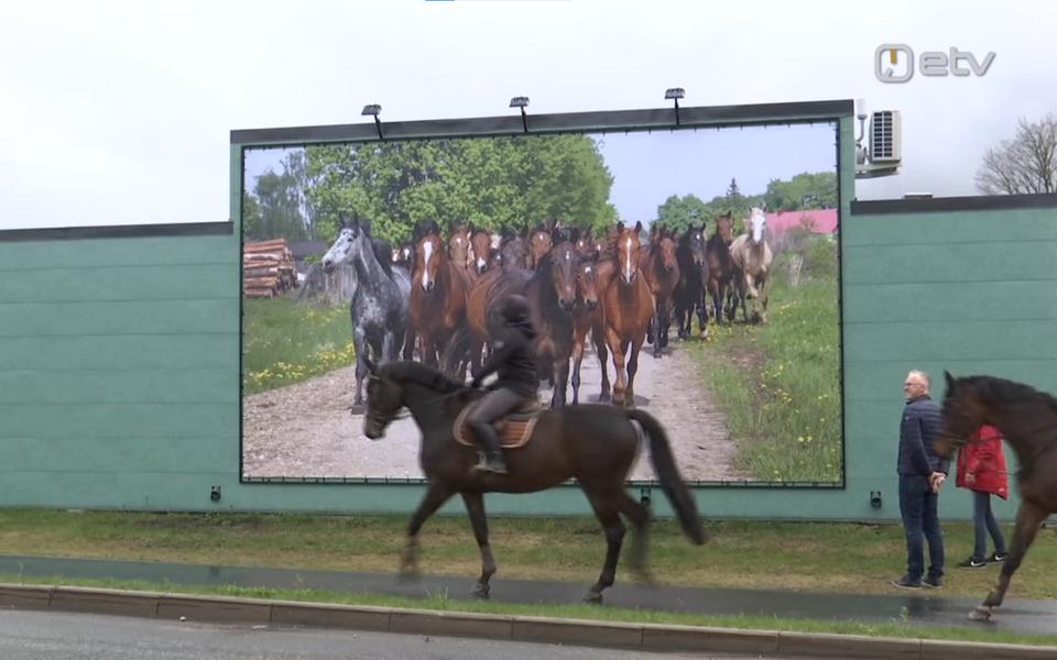 Tori bussiootepaviljoni tagaseina kaunistab alates neljapäevast hobuseid kujutav pannoo.