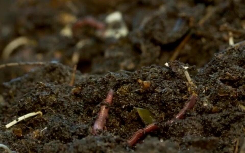 Kliimamuutus mõjutab Priit Penu sõnul muldasid kehvasti ka Eestis.