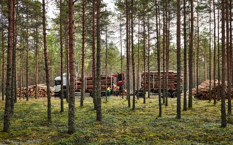 В период 2001–2019 годов в Эстонии было уничтожено 15 000 гектаров лесов, принадлежащих сети Natura 2000.