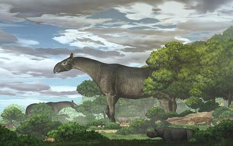 Loom kaalus 21 tonni ehk sama palju kui neli Aafrika elevanti.