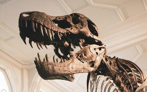 Dinosauruste väljesuremine algas arvatust varem.
