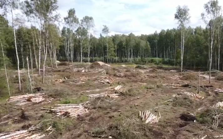 Вырубка деревьев в Ихасте.