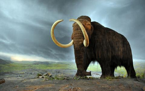 Viimased mammutid elasid Wrangeli saarel Tšuktšimaal veel umbes 4000 aastat tagasi, samal ajal kui kerkisid Egiptuse püramiidid.