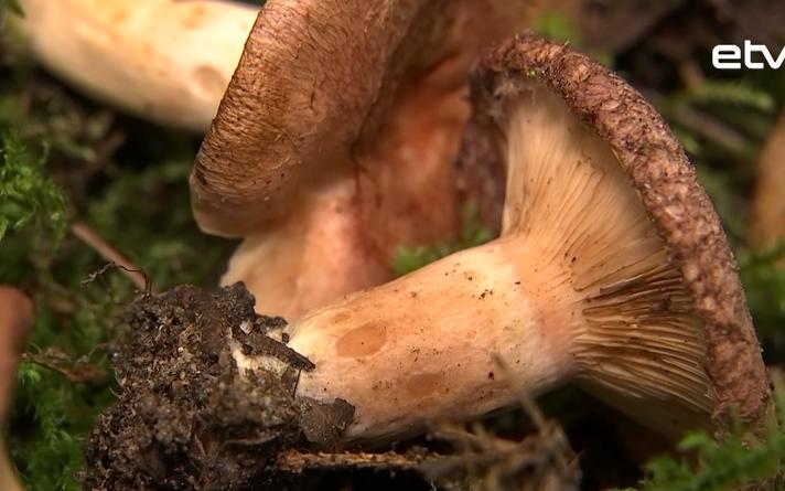 Выставка грибов в Тарту.